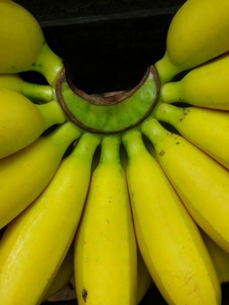 バナナの房アップ